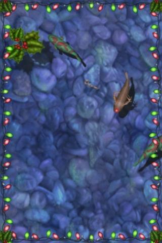 クリスマスですね。鯉の季節です。